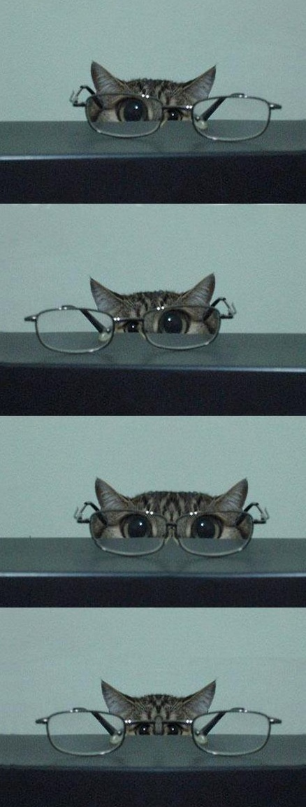 Reminds me of my kitties…