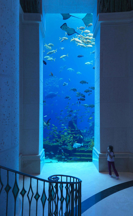 So cool, as long as you don't mind being underwater. :) Aquarium wall: Dubai