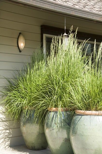 plant lemon grass in big pots for the patio… it repeals mosquitos and it grows tall & thick providing a lot of privacy