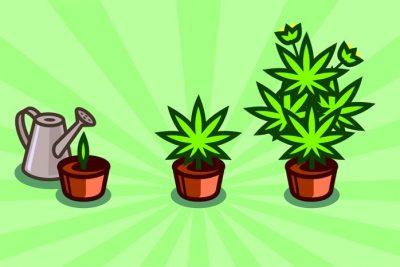 What You Need To Grow Marijuana Indoors