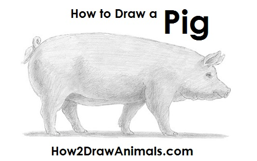 Image of: Getdrawings Draw Pig How2drawanimals How To Draw Pig