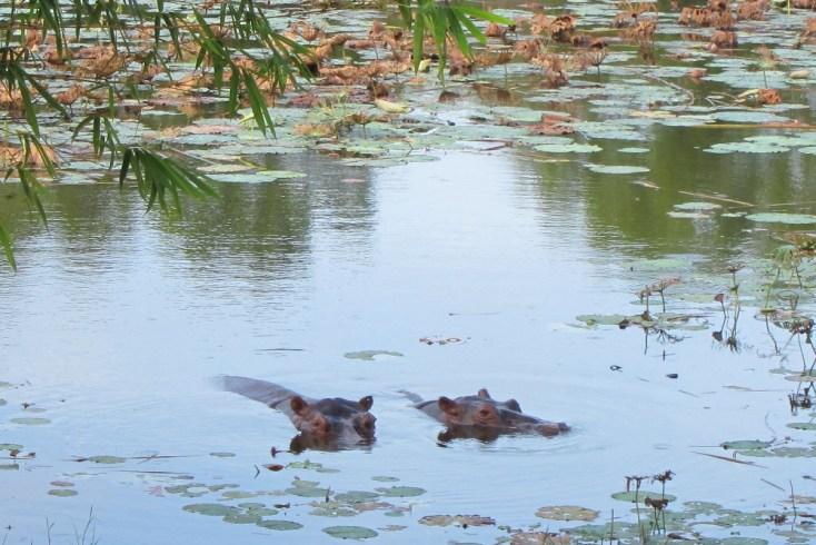 paya-indah-wetlands_0533