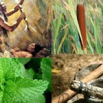 11 Plants Native Americans Used to cure