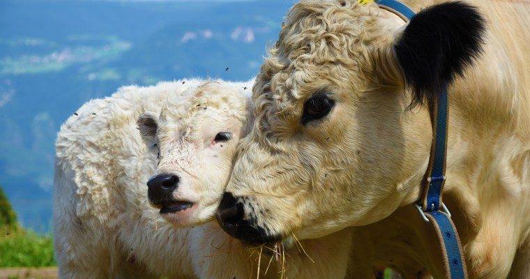 5 Reasons to Stop Consuming Animal Products
