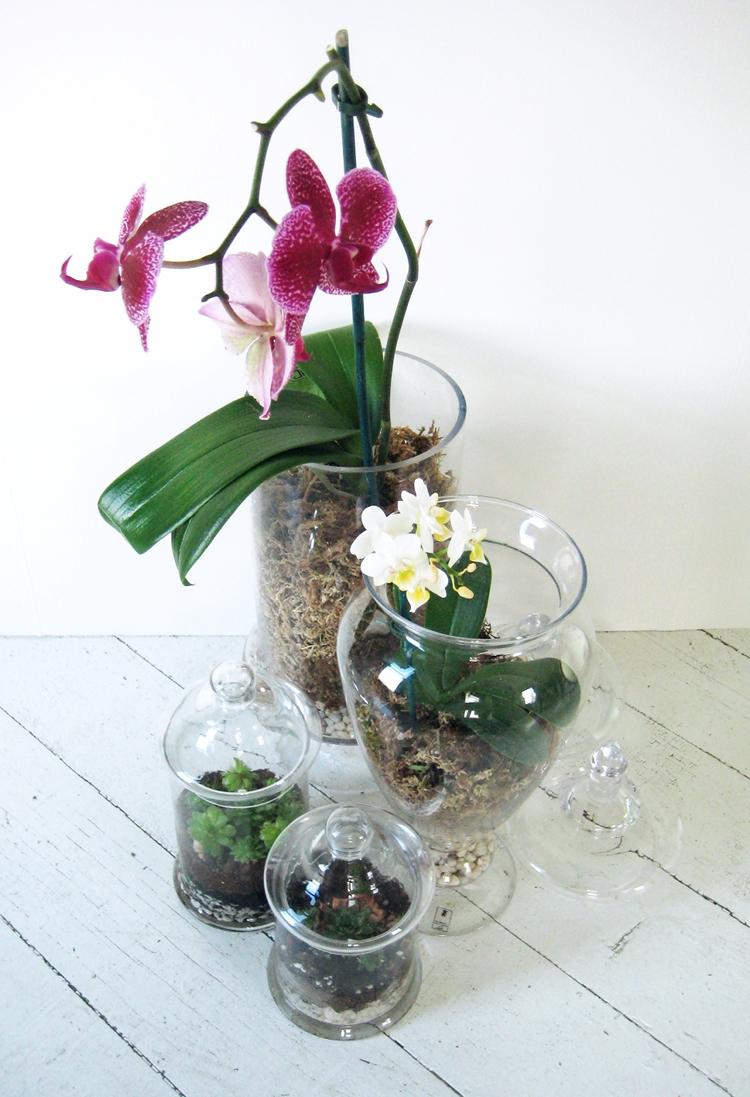 Home Decoration Plants