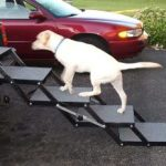 Best Dog Steps and RampsBest Dog Steps and Ramps