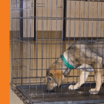 How To Crate Training Your