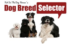 Choose the Best Dog Breed for Your Family
