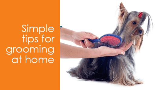 How to dog grooming save you money best top care with dogs dog grooming save you money solutioingenieria Gallery