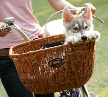 Best Dog Baskets for Bike Review