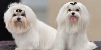 Groom A Dog With Long Hair