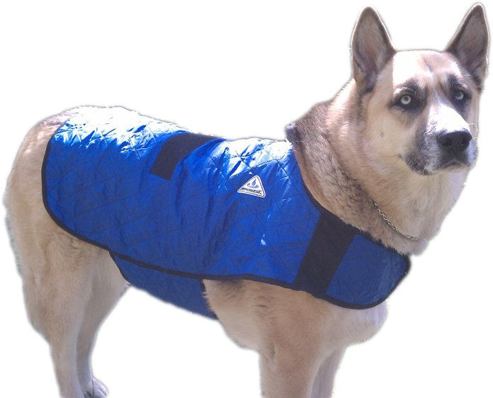 Best Dog Cooling Vest Review