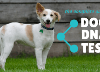 Best Dog DNA Test Reviews