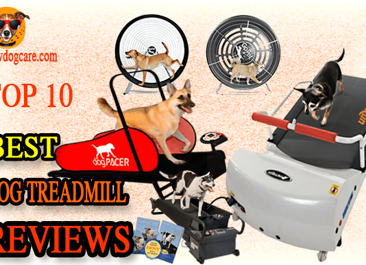 Best Dog treadmill reviews