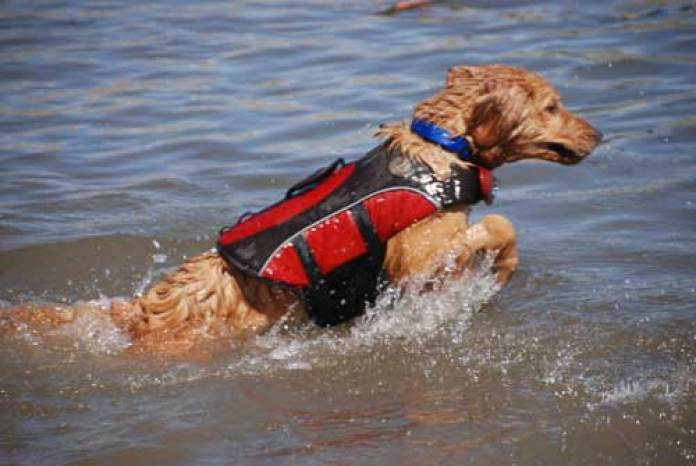 The Best Life Vest For Dogs Reviews