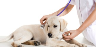 My Dog Is Sick how to