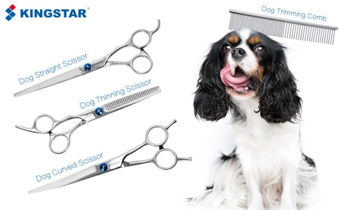 GROOM A DOG WITH SCISSORS AT HOME