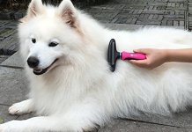 Best Deshedding Tools for dog Review