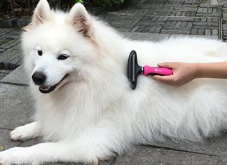 Best Deshedding Tools for dog Review