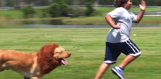 How to Keep Your Dog From Running Away