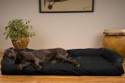 Best Orthopedic Dog Beds