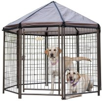 Best Outdoor Dog Kennel