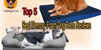 Top 5 Best Memory Foam Dog Beds Reviews