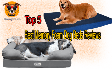 Top 5 Best Memory Foam Dog Beds Reviews