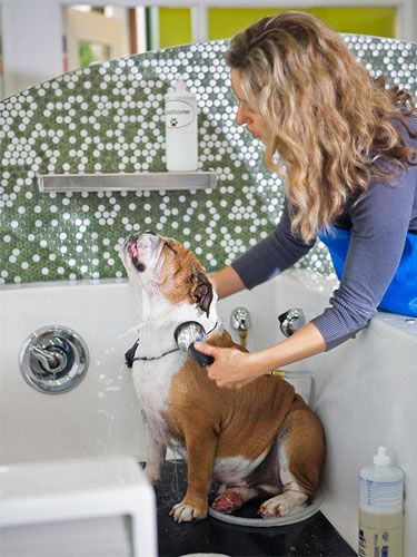 How to dog grooming save you money best top care with dogs solutioingenieria Gallery