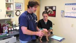 What to Expect At Puppy's First Vet Visit
