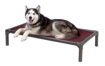 Kuranda raised dog bed