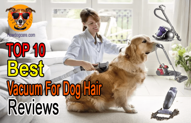 Top 10 Best Vacuum For Dog Hair Reviews