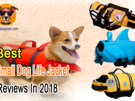 That also means taking your lovely small dogs with you to the beach that you may have in the market for best small dog life jacket to keep your pets safe.