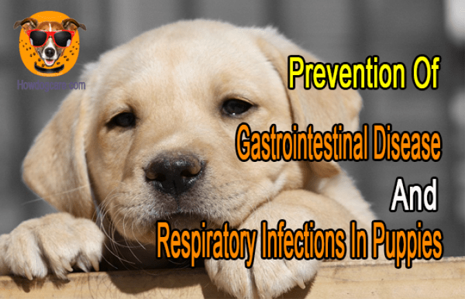 Prevention Of Gastrointestinal Disease and Respiratory Infections In Puppies