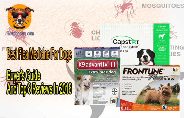 Best Flea Medicine For Dogs Buyers Guide And Top 8 Reviews In