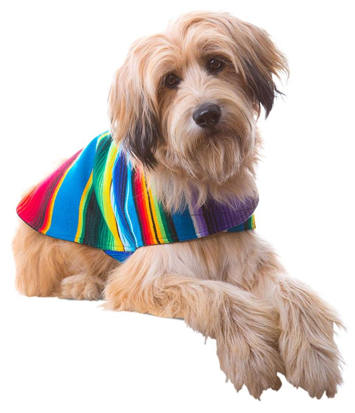 10 Dog Sweater Knitting Pattern For Winter Warmth - Best top care ...