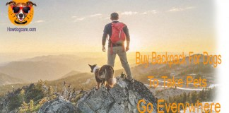Buy Backpack For Dogs To Take Pets Go Everywhere