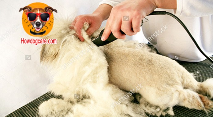 How to use a dog hair trimmer properly
