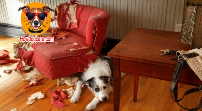 For the puppy often biting furniture