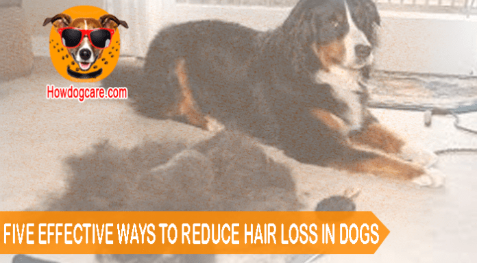 FIVE EFFECTIVE WAYS TO REDUCE HAIR LOSS IN DOGS