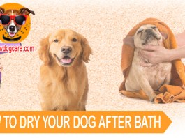 HOW TO DRY YOUR DOG AFTER BATH