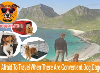 Why Be Afraid To Travel When There Are Convenient Dog Cage