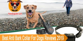 10 Best Anti Bark Collar For Dogs Reviews 2019