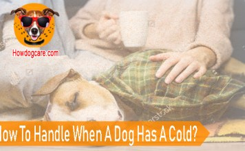 How To Handle When A Dog Has A Cold?