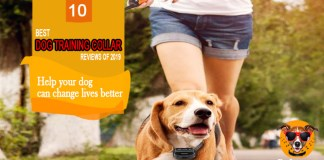 10 Best Dog Training Collar 2019 Reviews