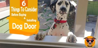 Dog Door 6 Things To Consider Before Buying And Installing