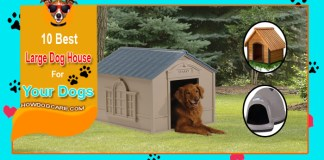 Top 10 Best Large Dog House Reviews (In 2021)