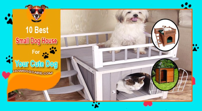 Top 10 Best Small Dog House Reviews
