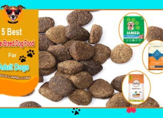 Top 5 Best Large Breed Dog Food Reviews