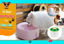 Top 10 Best Dog Water Fountain Reviews